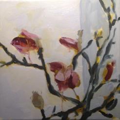 Rescued Magnolias